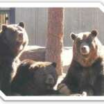 Grizzly Family Rescue Story